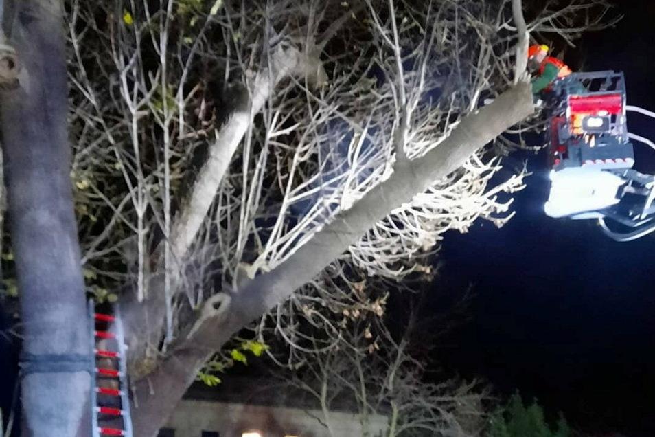 Mit der Drehleiter im Löscheinsatz am Baum – Kameraden der FFw Meißen wurden am Donnerstagabend in den Käthe-Kollwitz-Park gerufen.