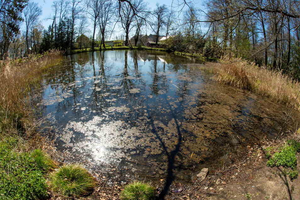 Der Parkteich am Schloss Schönfeld ist dringend sanierungsbedürftig. Große Äste liegen hier im verschlammten Wasser.