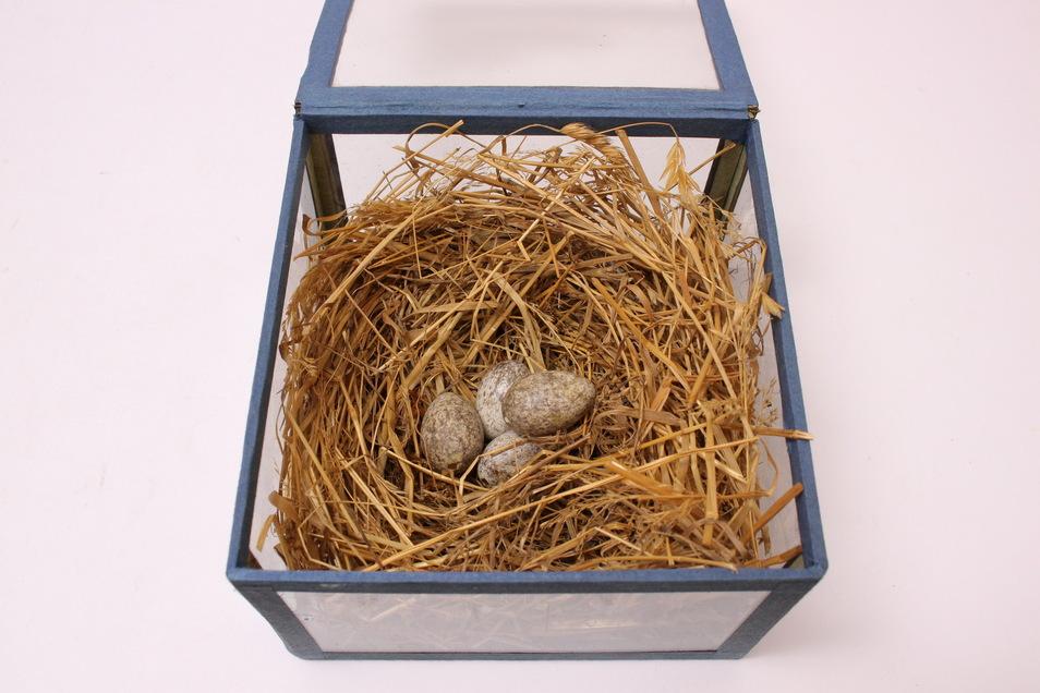 Wer sammelt das Nest eines Haussperlings? Die TU Dresden. Es ist eines von rund einer Million Objekte im Sammlungsbesitz der Hochschule.
