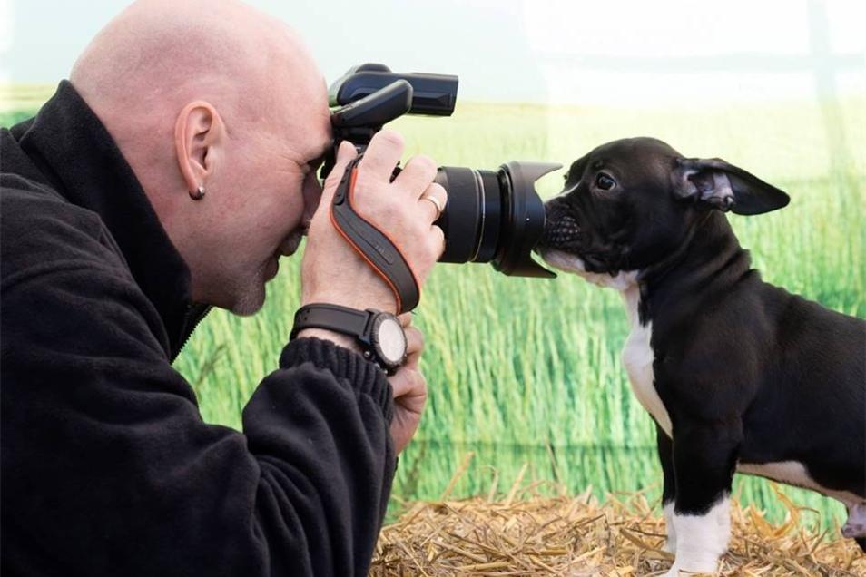 Schau! Statt vor Hundefotograf Stefan Heines Modell zu sitzen, untersucht Bulldogge Joker lieber das Objektiv.
