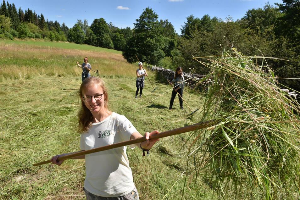 Luisa Weber macht beim 25. Heulager der Grünen Liega im Bielatal mit. Die Ex-Gymnasiastin aus Bärenstein wird dieser Tage von Schülern unterstützt, die sich damit am Umwelttag ihrer Schule beteiligen. Dieser findet am 15. Juli in Altenberg statt.