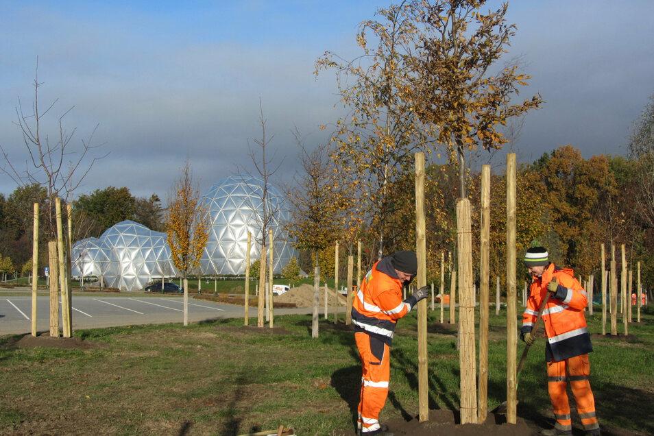 Sandra Miersch und Erik Hain pflanzten jetzt zusammen mit weiteren BBB-Lehrlingen Bäume und Sträucher am Parkplatz vor dem Saurierpark in Kleinwelka.