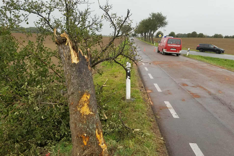Gegen diesen Baum am Abzweig Kalkstraße war der Senior am Montag mit seinem Opel gekracht.