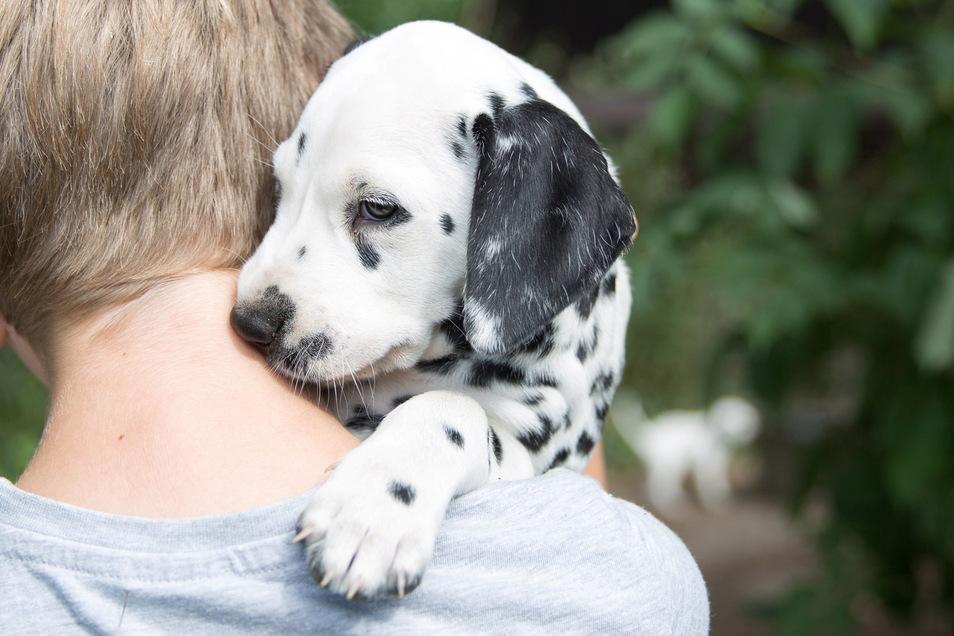 In den ersten Wochen sollte sich das Herrchen viel Zeit nehmen und Vertrauen zum jungen Hund aufbauen.