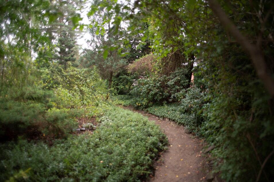 Der parkähnliche Teil des großen Gartens nimmt etwa ein Drittel der Grundstücksfläche ein. Er wurde schon 1960 von den Vorbesitzern angelegt.