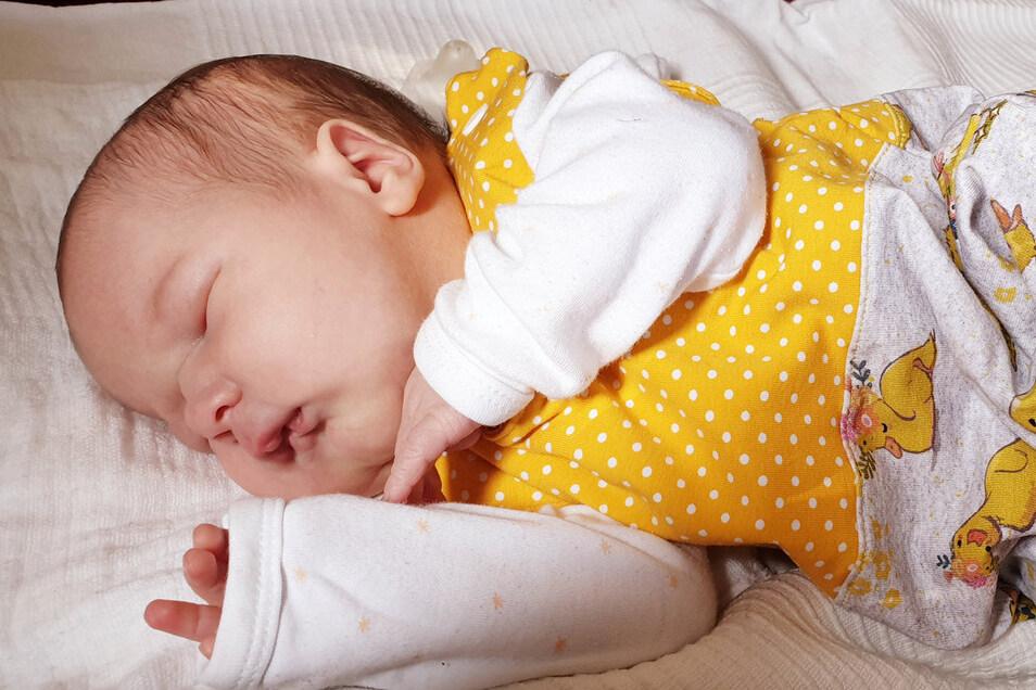 Hermine Caroline Geboren am 5. Juni 2020 Geburtsort Kamenz Gewicht 3.670 Gramm Größe 49 Zentimeter Eltern Caroline und Paul Schlafke Wohnort Lomnitz