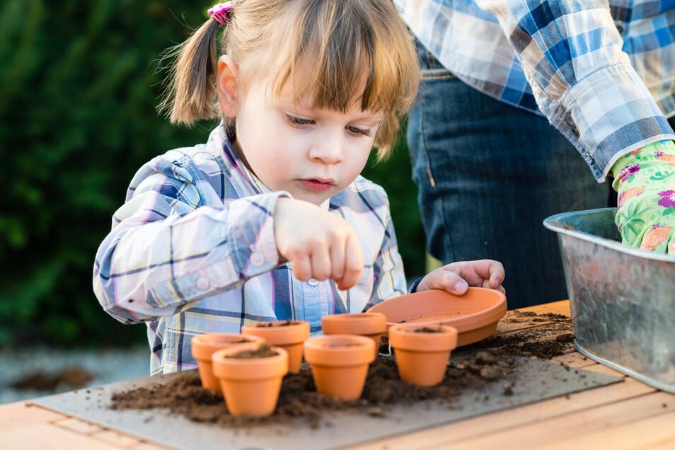 Erde, Samen und viel Liebe: Wer wie hier die Samen in kleine Töpfe einzeln sät, muss später allerdings noch mal umpflanzen in größere Gefäße oder ins Freie.