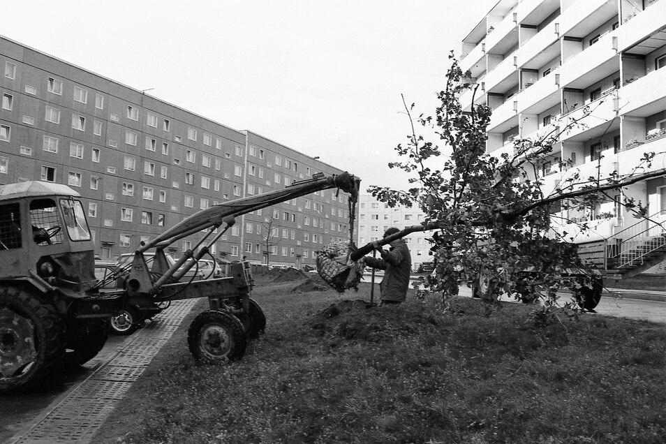 1990 wurden in der Antonstraße Bäume gepflanzt.