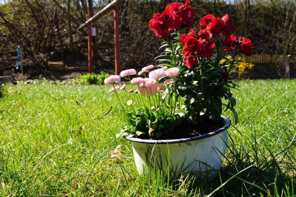 Alte Töpfe - frisches Grün. Mit etwas Kreativität kann man seinem Garten eine ganz individuelle Note geben.