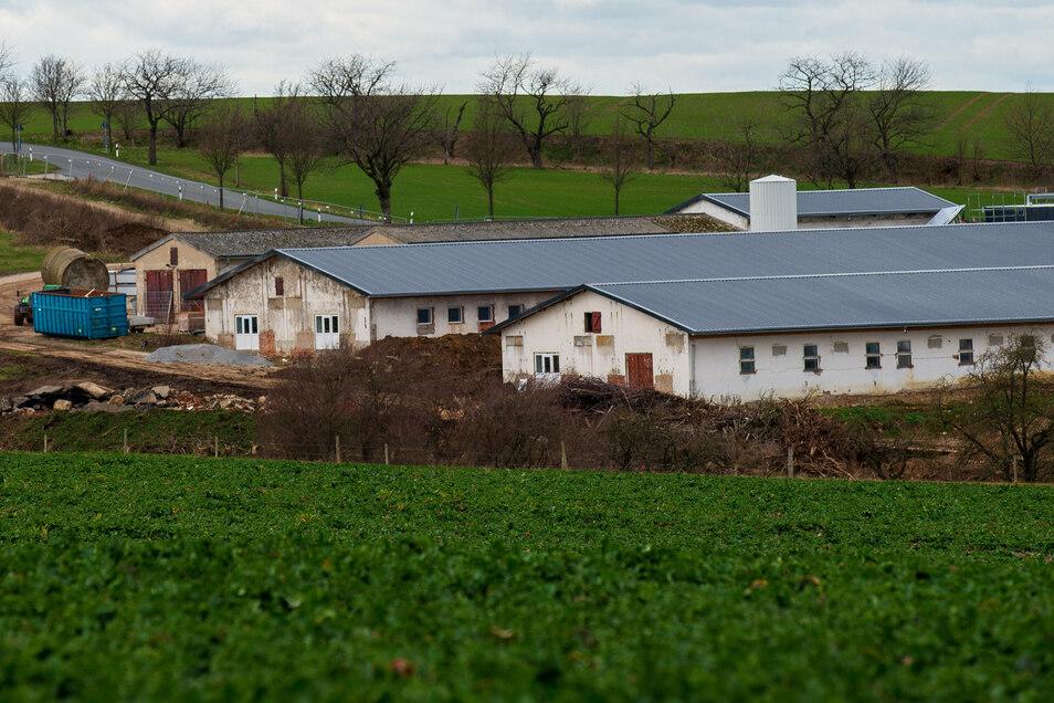Der Ausbau der ehemaligen Schweinemastanlage in Langenwolmsdorf bei Stolpen bleibt ein heißes Thema.