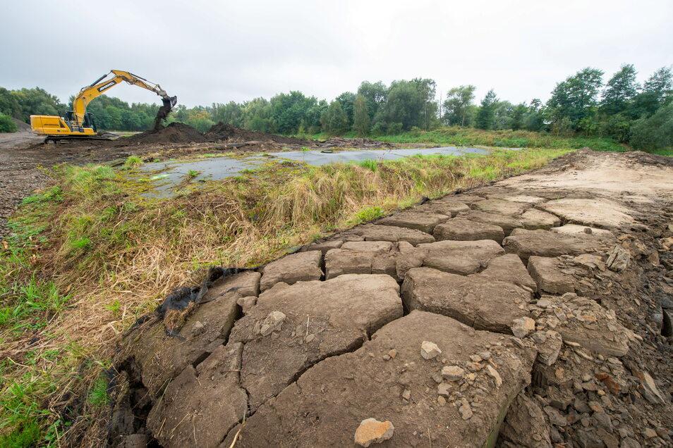 Vor sieben Jahren wurden diese Sedimente aus dem Radeburger Stausee geholt und in Geotextilschläuchen zwischengelagert. Derzeit wird der getrocknete Schlamm abtransportiert, damit im Spülfeld der Talsperre Platz wird.