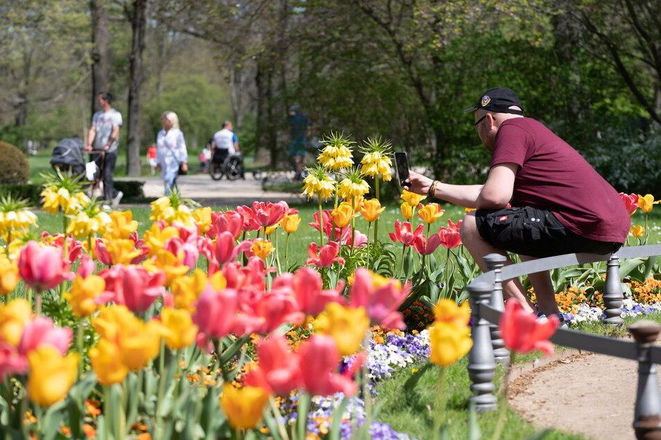 Im Großen Garten konnten sich die Besucher an der Blütenpracht erfreuen.