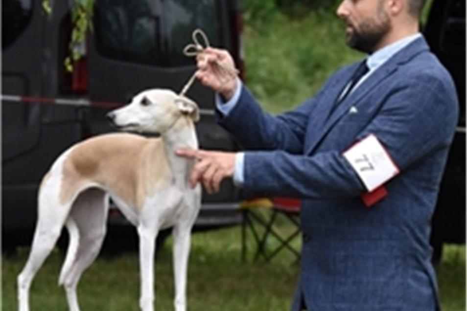 Ein Besitzer mit einem Whippet.