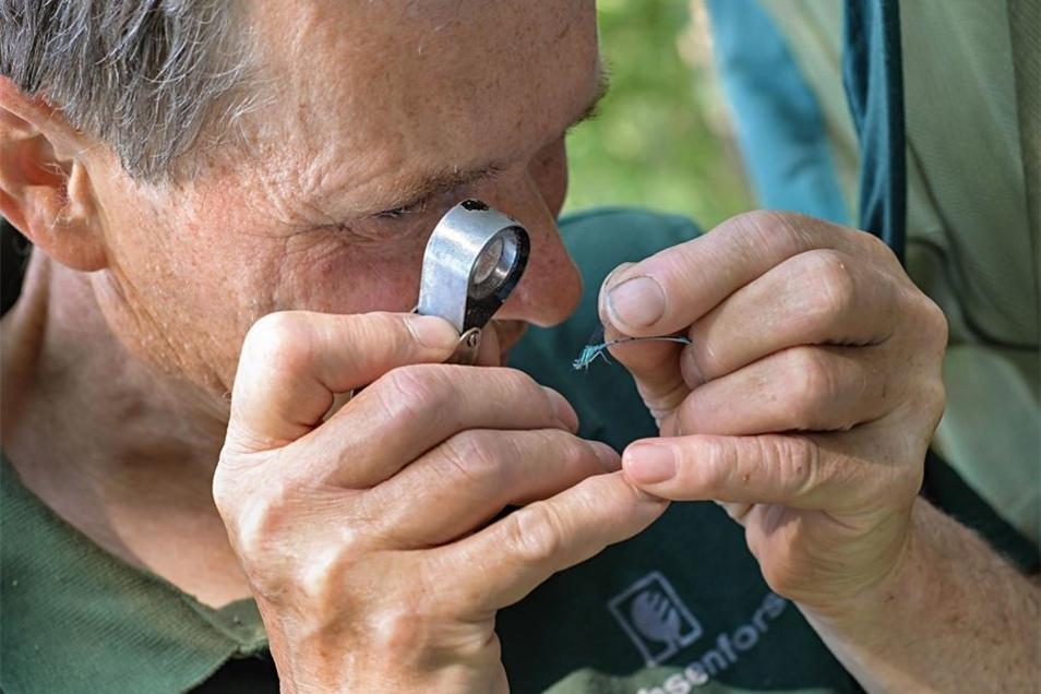 Mit der Lupe nimmt der Naturparkranger die Libellen ganz genau in Augenschein. Er kann zum Beispiel bestimmen, ob es sich um Männchen oder Weibchen handelt.