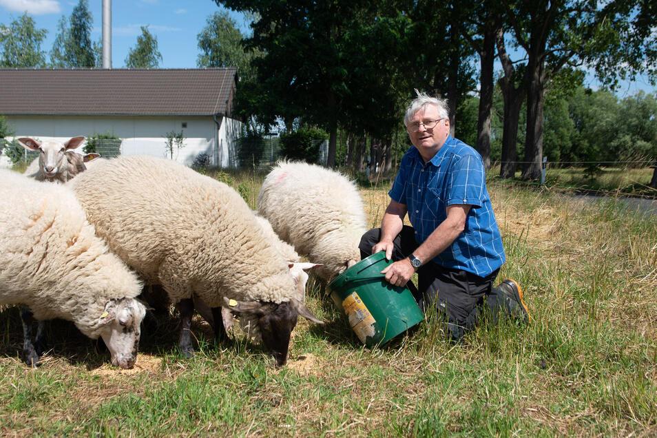 Jürgen Werner hat in der Nacht zum Dienstag sieben Schafe verloren. Sie wurden von einem oder zwei Wölfen gerissen. Die restlichen Schafe sind noch sehr verängstigt, er holt sie deshalb in den Stall.