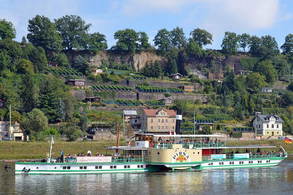 Das kleine Paradies auf den Weinhängen an der Elbe. Angebaut werden hier unter anderem die Sorten Goldriesling, Müller Thurgau und Dornfelder.