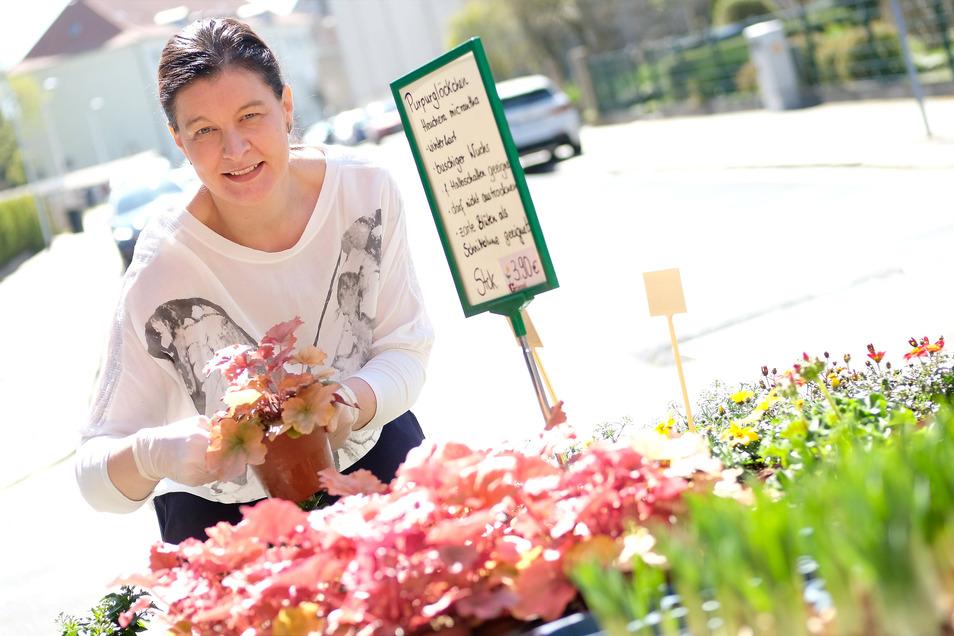 Anne Griesel von der Gärtnerei Griesel auf der Zscheilaer Straße kann auch in diesem Frühjahr ihre Stammkunden begrüßen. Hinzu gekommen sind neue Kunden, die sonst in den jetzt geschlossenen Baumärkten Pflanzen gekauft haben.