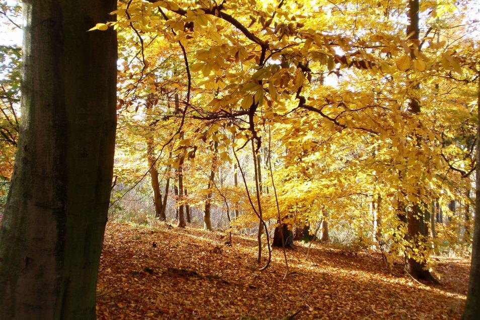 Herbststimmung im Wald auf dem Schwarzberg.