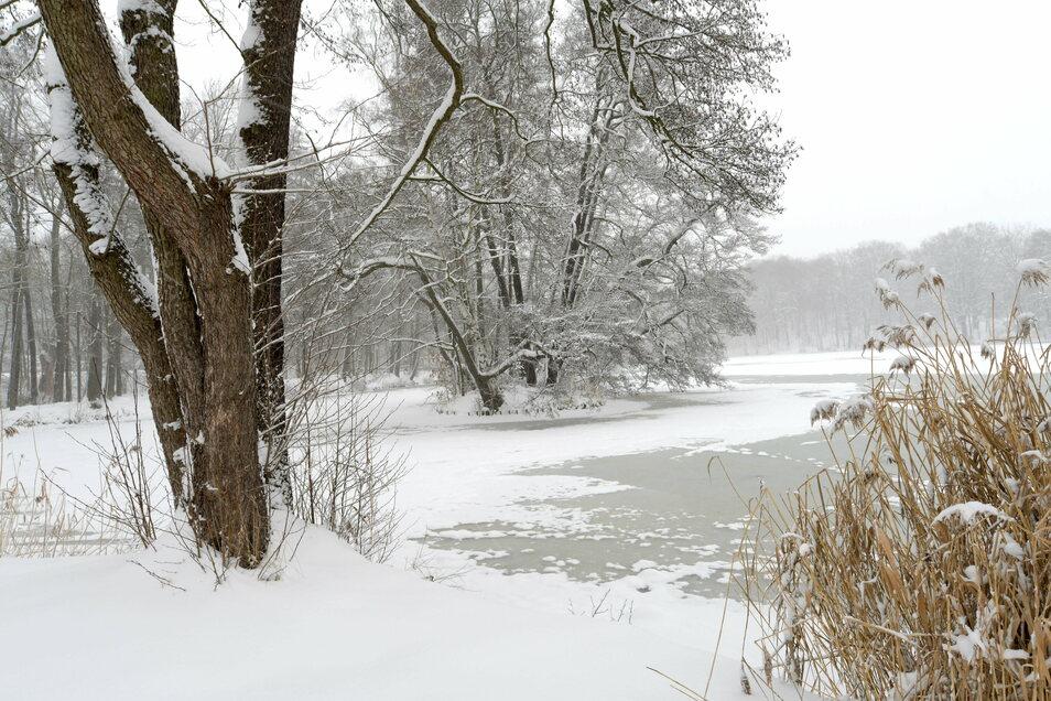 In winterlicher Ruhe der Teich an der Gondelfahrt in Oppach.