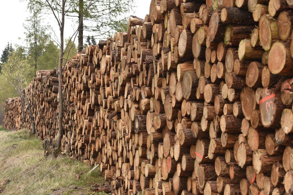 In den Wäldern des Osterzgebirges stapelt sich das Holz. Um dem Borkenkäfer keinen Unterschlupf zu bieten, müssen befallene Stämme aus dem Wald gebracht werden.