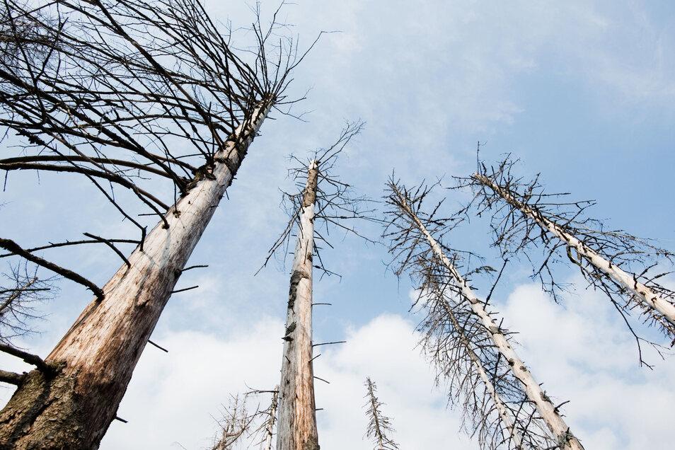 Der deutsche Wald leidet unter Dürre, Schädlingen und Stürmen.