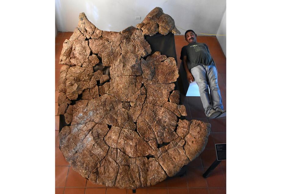Der venezolanische Paläontologe Rodolfo Sánchez liegt neben dem Panzer eines Stupendemys geographicus Männchens der in 8 Millionen Jahre alten Ablagerungen in Venezuela gefunden wurde.