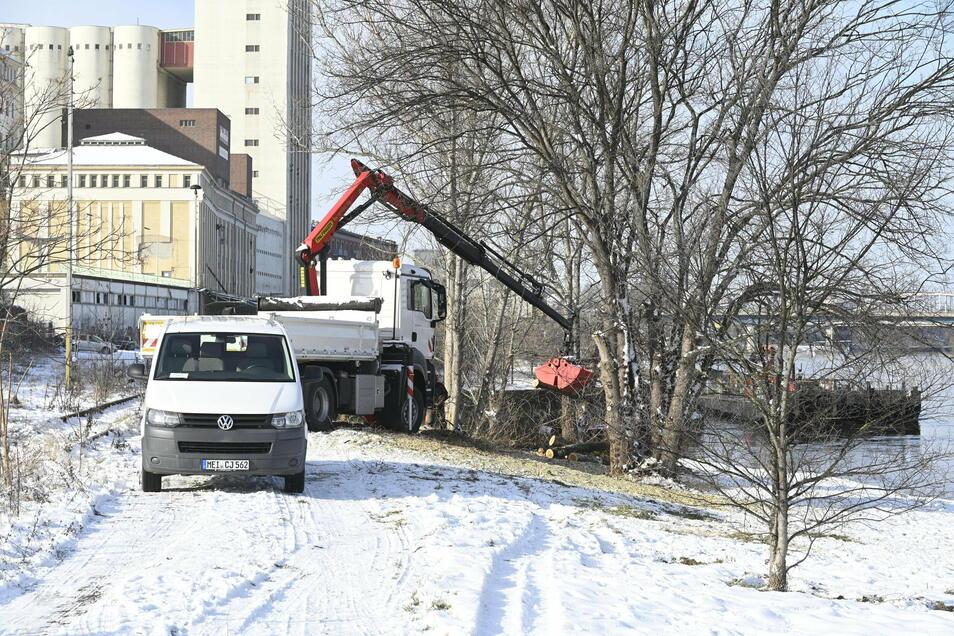 Mit Kleinbus, Lkw und Schiff: Am Riesaer Elbufer finden seit Montag Pflegearbeiten statt. Einige Bereiche werden dabei allerdings ausgespart.