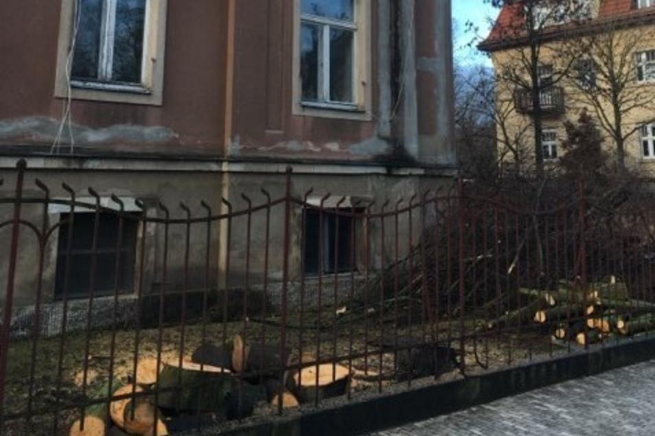 Rund um die Villa wurden auf dem Grundstück die Bäume gefällt.