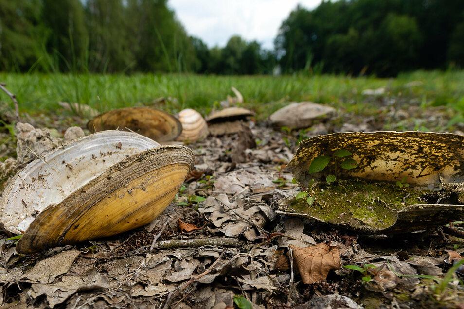 Der ausgetrocknete Große Röderteich in Großharthau vor einem Jahr. Jetzt beginnt die Sanierung dieses Gewässers und des benachbarten Kleinen Röderteiches.