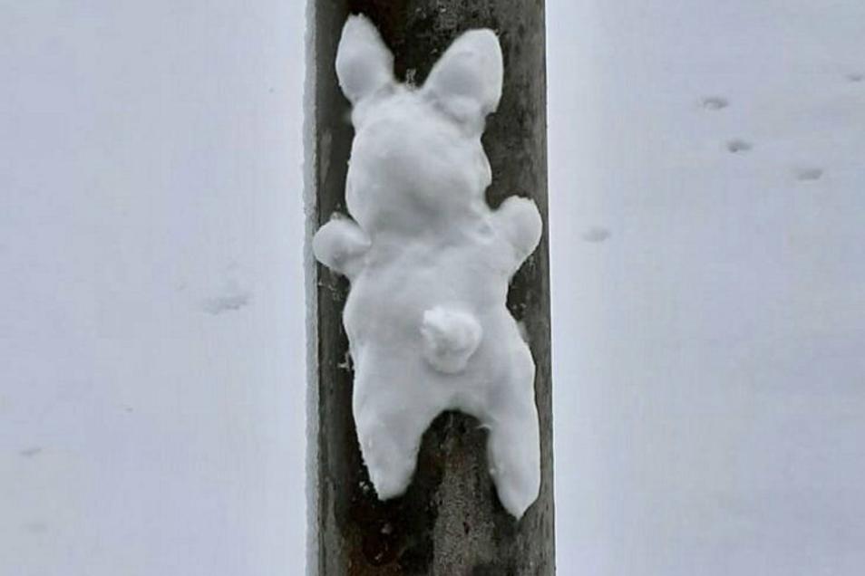 Schneemänner waren gestern: Schneehasen sind der neue Trend in diesem Winter. Das sagt Frank Heinze aus Rosenthal und hat solch ein Exemplar fotografiert - hübsch drapiert an einem Laternenmast.