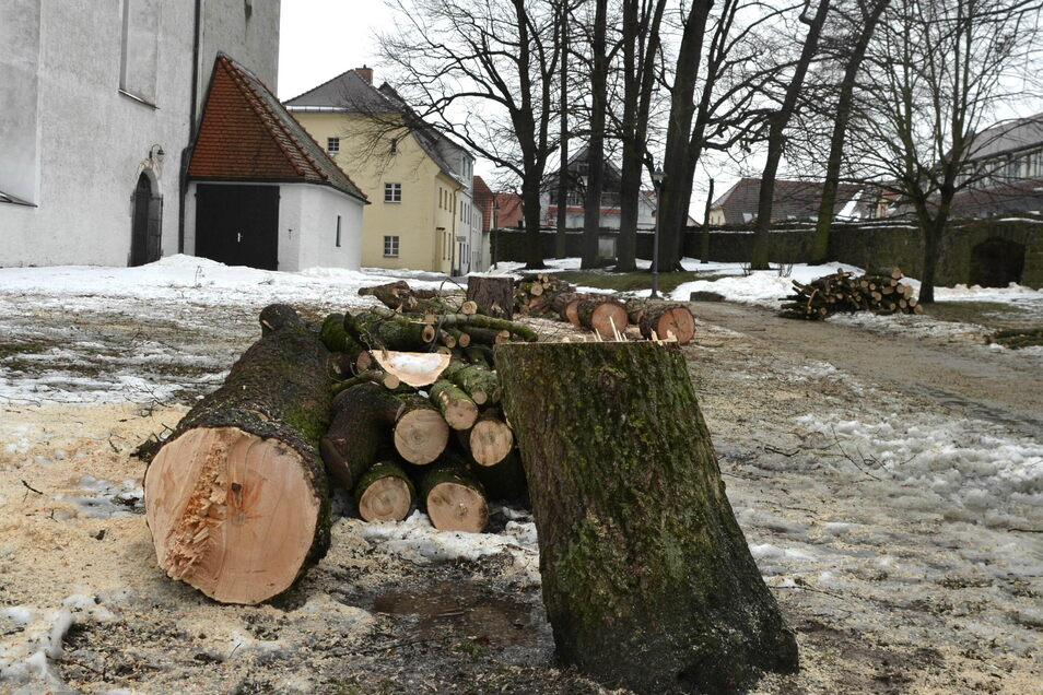 An der Johanneskirche in Reichenbach wurden Bäume gefällt.