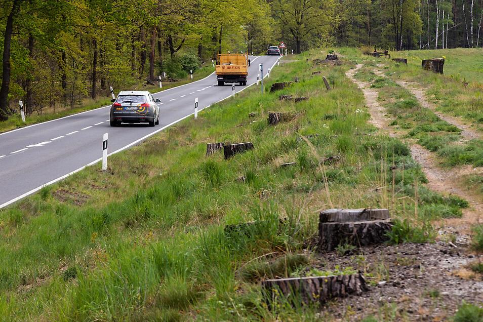 Rund 1.700 Bäumen sind von 2017 bis 2018 in Vorbereitung auf den Deichbau gefallen.