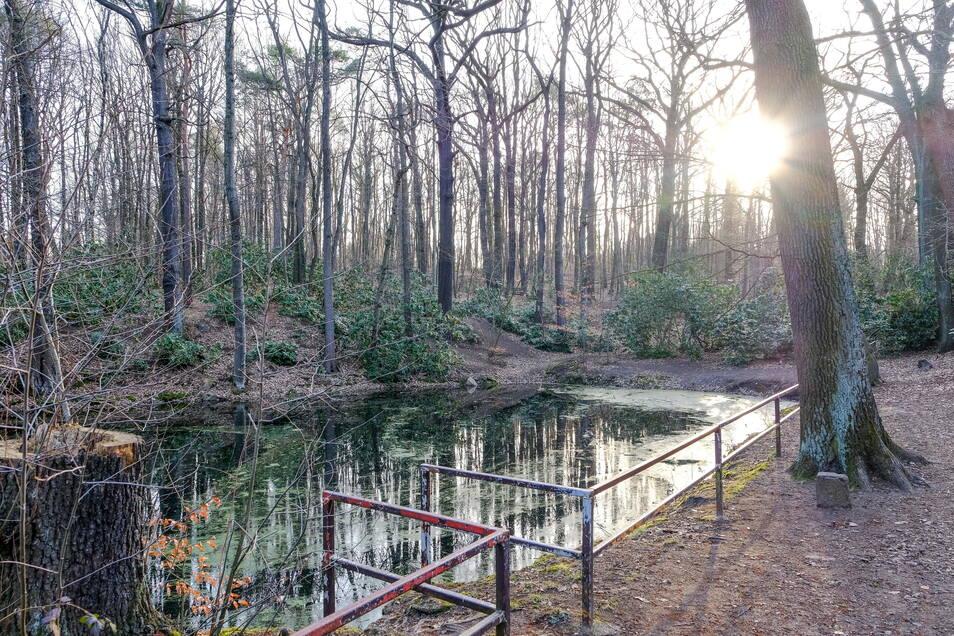 Am Geländer an Schwarzes Teich ist die Farbe ab, auf der Wasseroberfläche schwimmt eine Algenschicht.