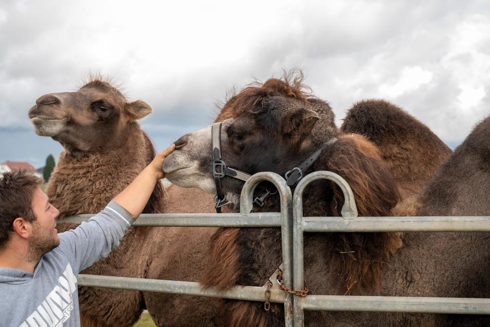 Zirkusdirektor Phillip Frank zeigt die Kamele Aladin und Massai.