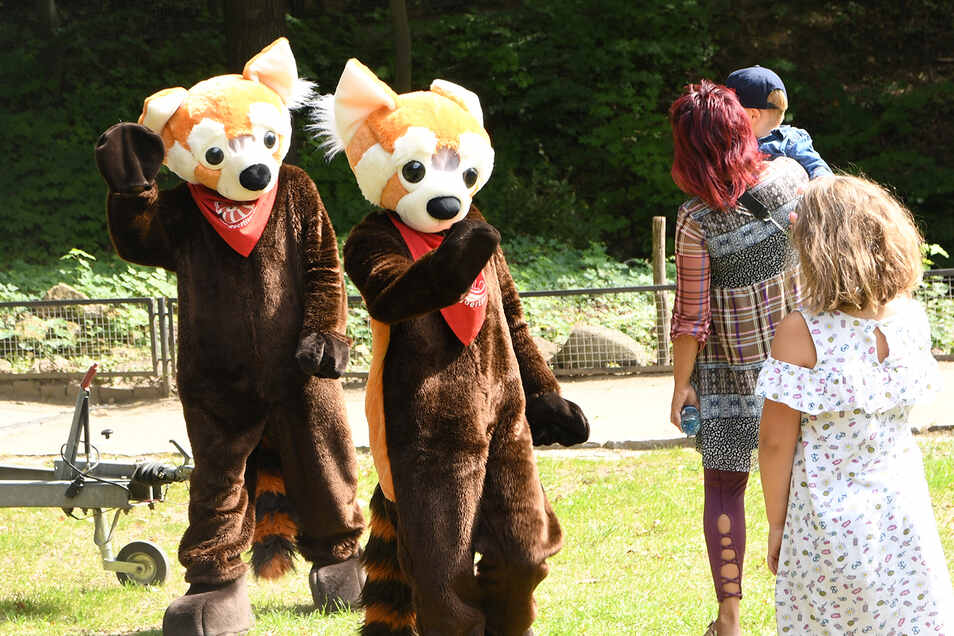 Alle Kinder können sich am verkaufsoffenen Sonntag auf das Maskottchendes Naturschutz-Tierparks Görlitz, den Roten Panda, freuen.