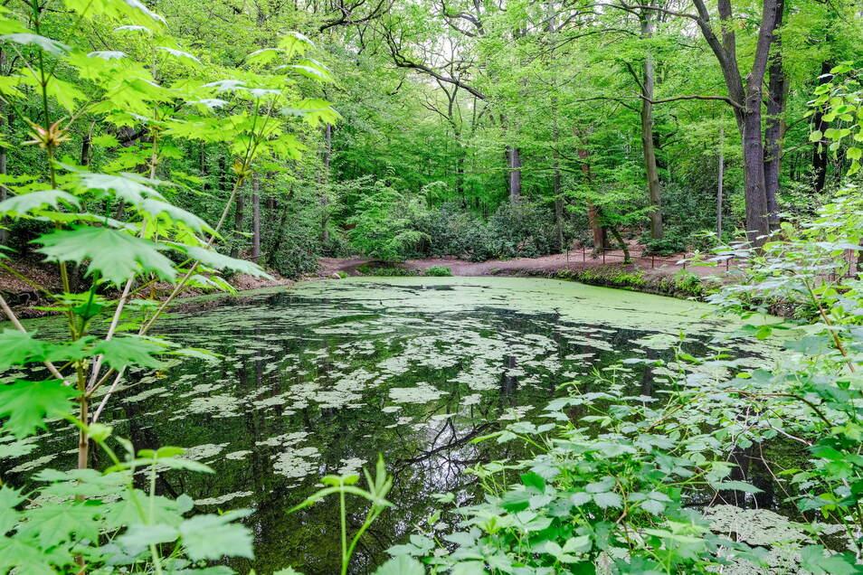 Schwarzes Teich ist ein zentraler Anlaufpunkt für Spaziergänger im Waldpark in Radebeul-West. Das Ufer des Gewässers soll attraktiver werden.