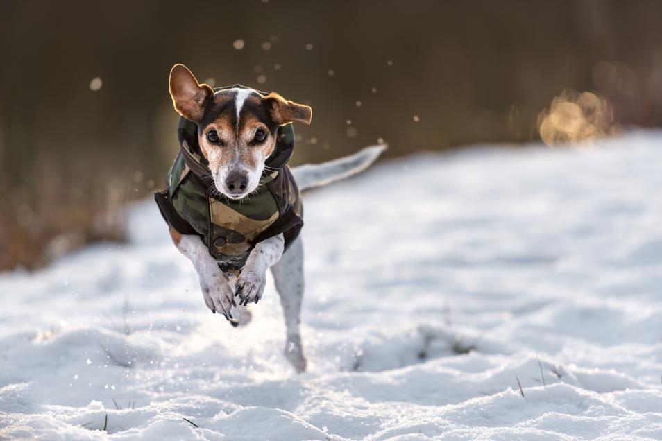 Beim Gassi gehen im Dauerfrost sollten vor allem kälteempfindliche Hunderassen immer in Bewegung bleiben.