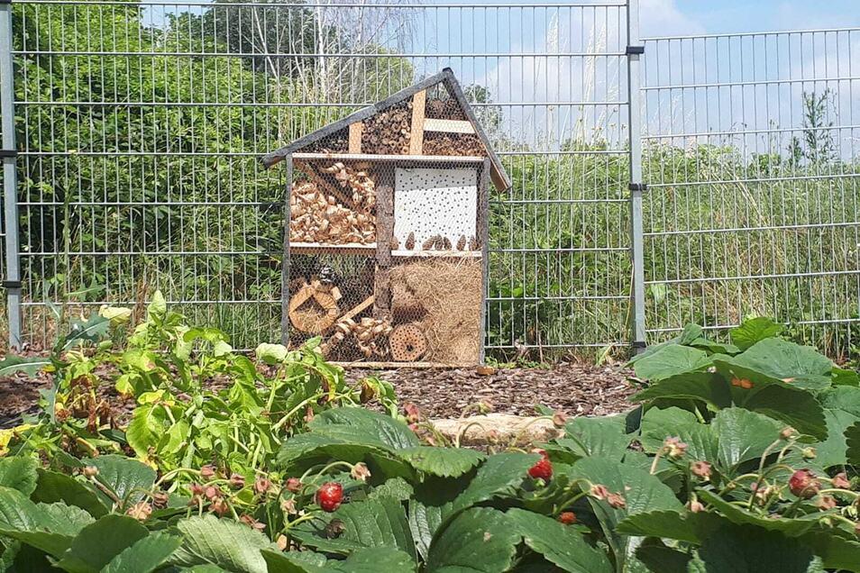 Das Insektenhotel der Aritaschule vor den Erdbeerpflanzen.