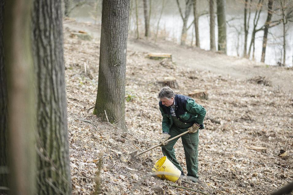 Der Forstunternehmer Frank Stübner aus Sohland pflanzt am Weinberg in Görlitz 800 Stieleichen und 300 Hainbuchen.