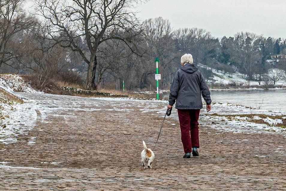 Strehlaer Hundehalter müssen momentan sehr vorsichtig beim Gassigehen sein. Denn an der Elbe soll jemand vergiftete Köder ausgelegt haben.