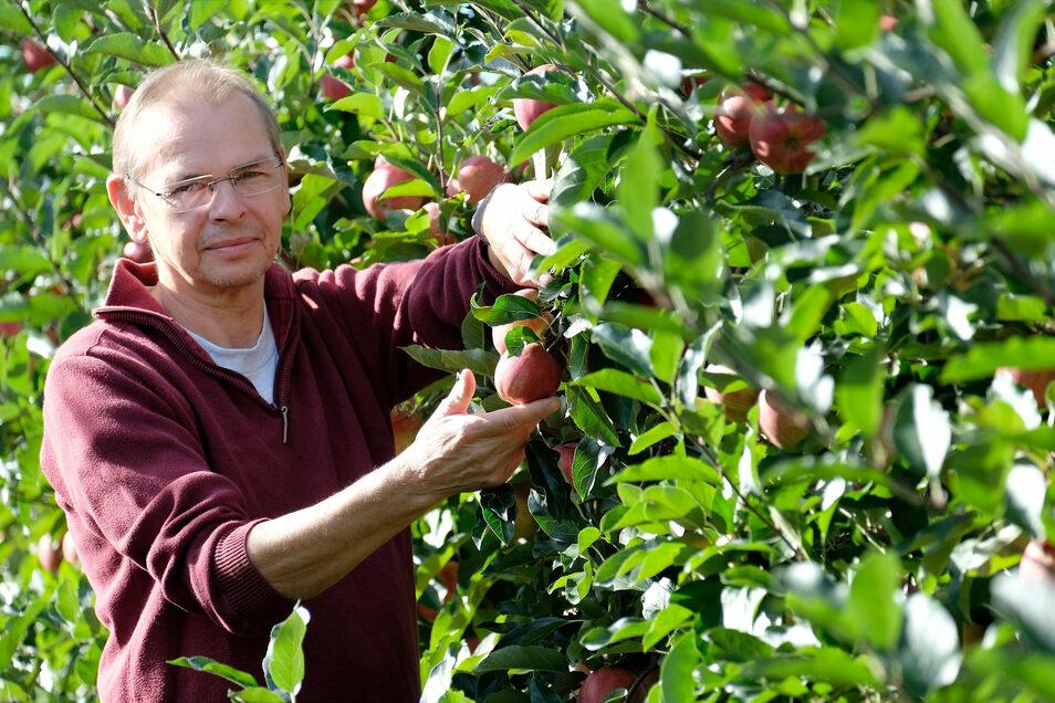 Steffen Geisler baut 20 Apfelsorten auf seiner Plantage an. Aktuell sind die Gala-Äpfel reif.