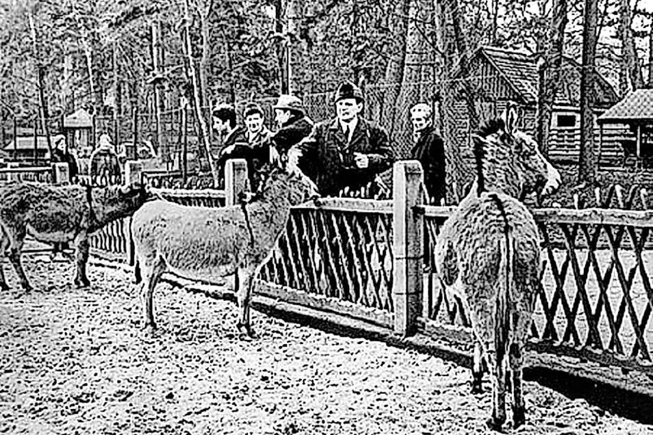 Auch internationale Gäste hat der Tierpark immer wieder angezogen, hiereine Delegation aus Italien im Jahre 1971.