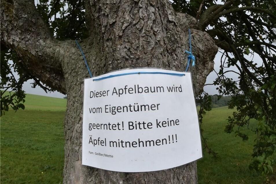 Diese Äpfel bei Pretzschendorf will der Besitzer selbst ernten.