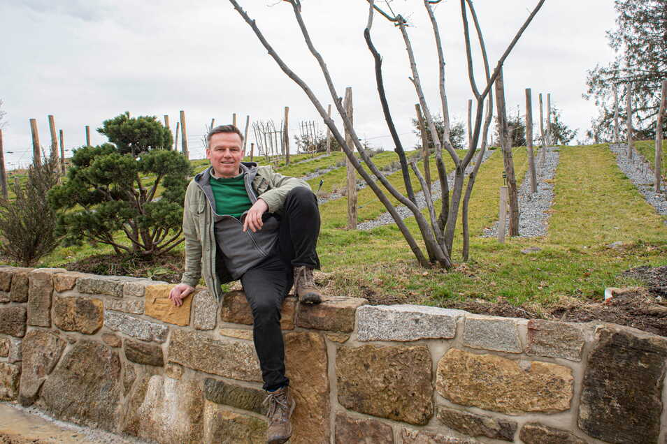 Garten- und Landschaftsbauer Sandro Gebler experimentiert auch gern auf seinem Firmengelände in Gersdorf im Haselbachtal. Kürzlich legte er einen kleinen Weinberg an - mit Spalierobst und viel Lavendel dazwischen.