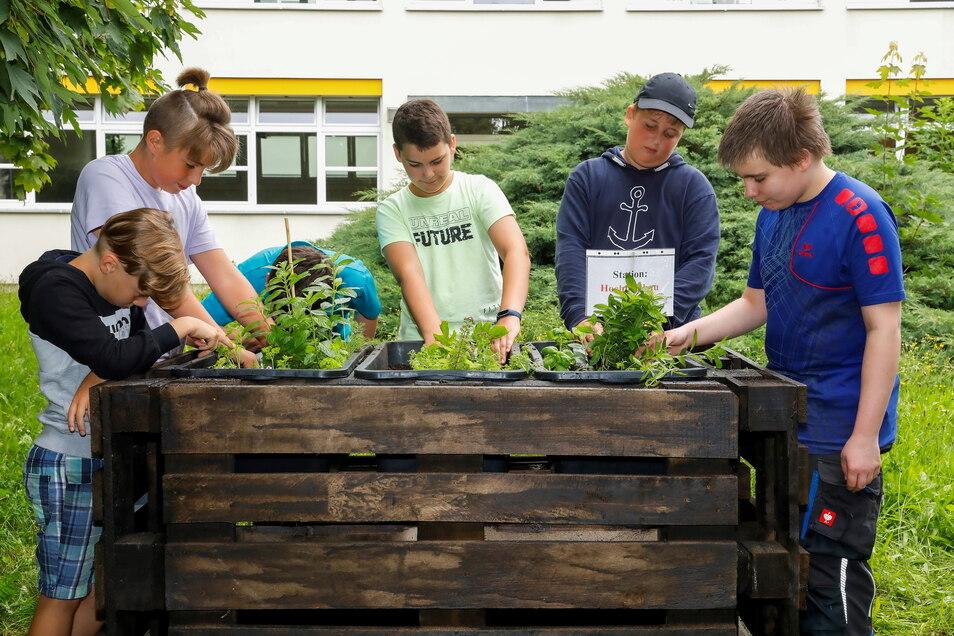 Bei einem Umwelt-Aktionstag bepflanzten die Fünftklässler der Andert-Oberschule unter anderem Hochbeete.