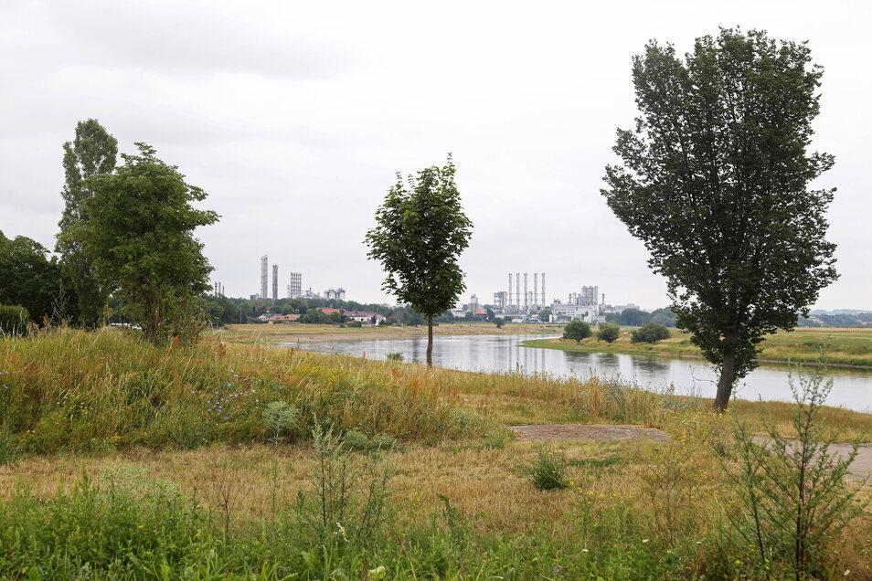 Die Elblandschaft in Nünchritz ist geprägt von zahlreichen Bäumen und Büschen. Manche von ihnen sollen für den Bau einer Hochwasserschutzanlage weichen. Doch das Vorhaben musste genau untersucht werden.