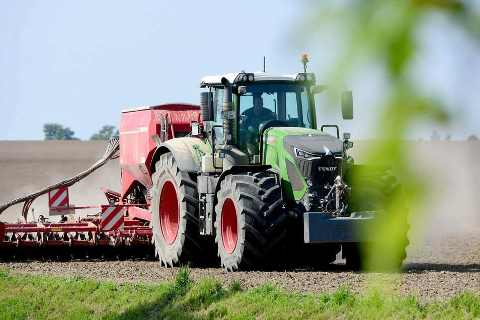 Nach einer guten Ernte im Süden des Kreises, wird schon wieder gesät: Hier soll für die Miku Oberseifersdorf nächstes Jahr Weizen wachsen.