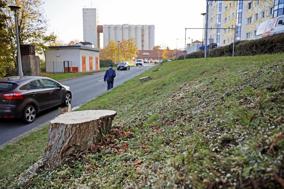 Die Baumreihe an der Bahnhofstraße war diese Woche gefällt worden. Nun ist was in Weida dran.