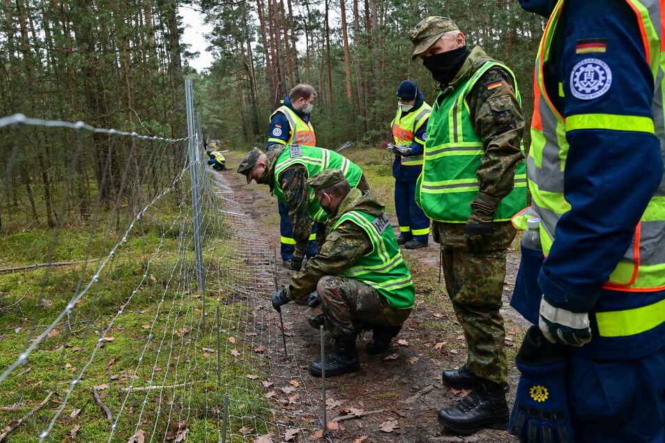 Mit dem Bau von Zäunen soll der Afrikanischen Schweinepest im Kreis Görlitz Einhalt geboten werden.