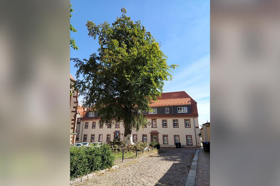 Aus der Lutherbuche am Kirchplatz wurde Totholz ausgeschnitten. Für das Belüften des Erdreiches fehlt aber noch Geld.